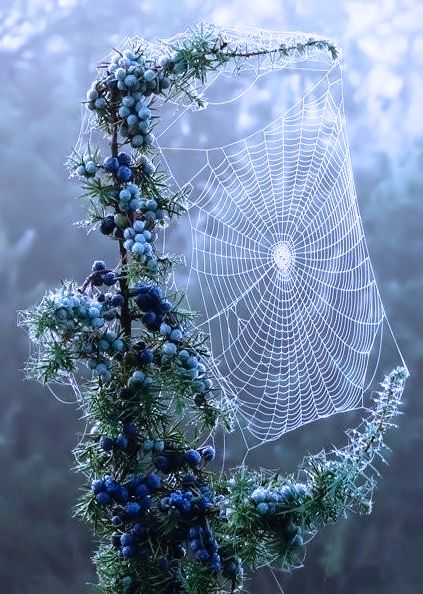 my misty morning - Don't like spiders at all, but this is lovely!
