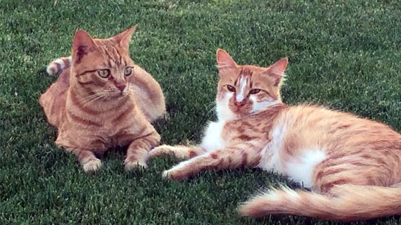 Semy & Remy - Cats are part of the team hotel, and thanks to their hard work there is no need to use environmentally harmful substances.