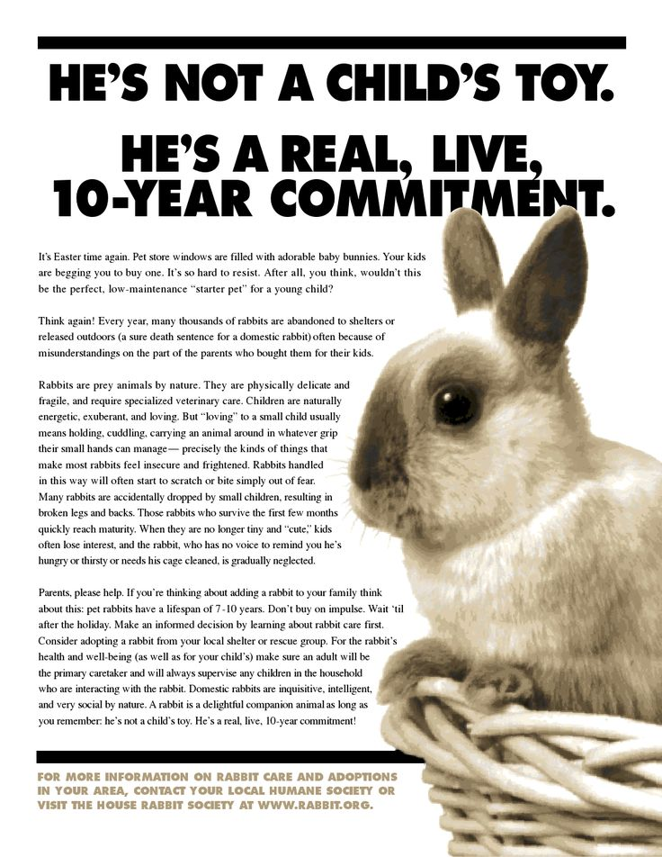 Easter House Rabbit Society | Party Invitations Ideas