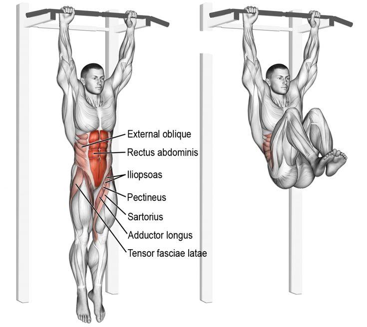 69 best Anatomie musculation : Jambes images on Pinterest   Anatomy ...