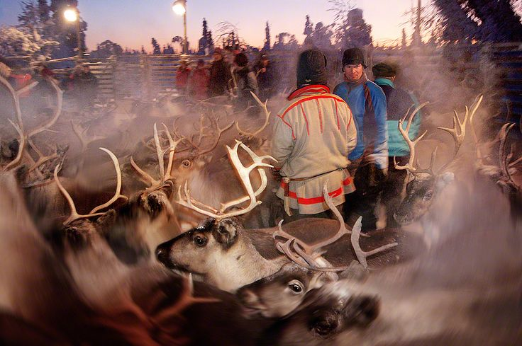 All sizes | D Reindeer 23 | Flickr - Photo Sharing!