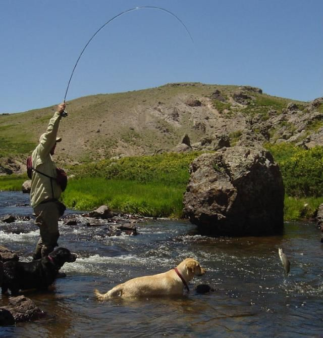 The 25 best fly shop ideas on pinterest shopkins for Fly fishing stores near me