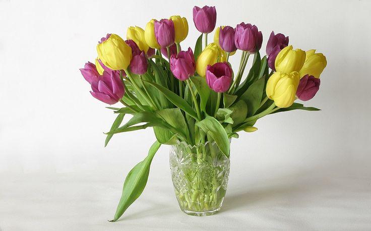 Foto-tapeta na plochu: Tulipány, rozměry: 1440x900