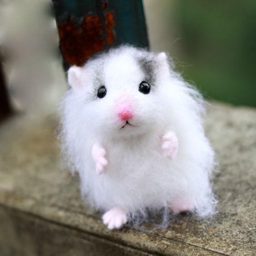 cute mice pictures