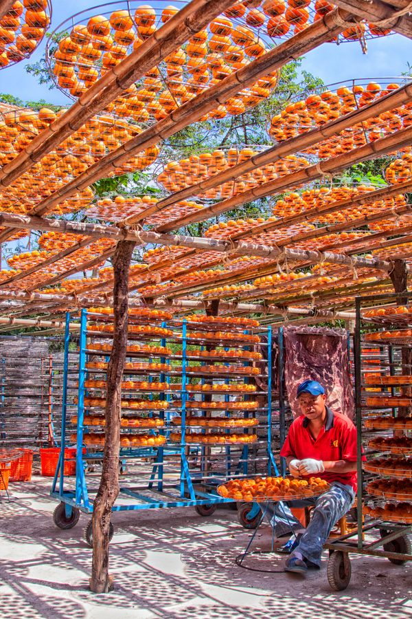Taiwanese man working at a Persimmon Drying factory in the mountains of Hsinchu county.