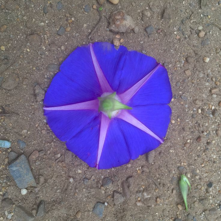 Purple at its best