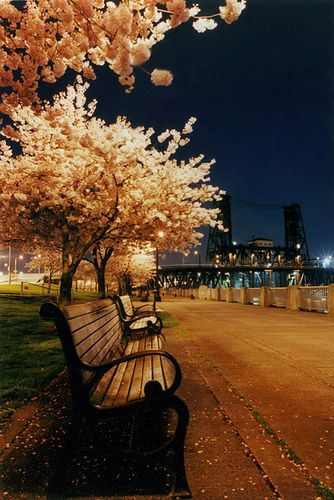 Portland, Oregon.I want to see this place one day.Please check out my website thanks. www.photopix.co.nz
