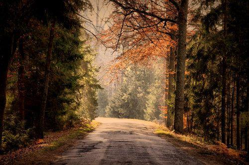 #fall #autumn