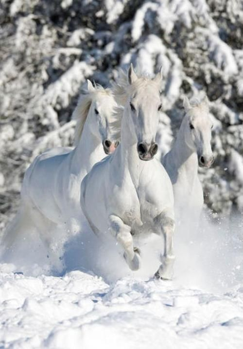 Dashing through the snow.