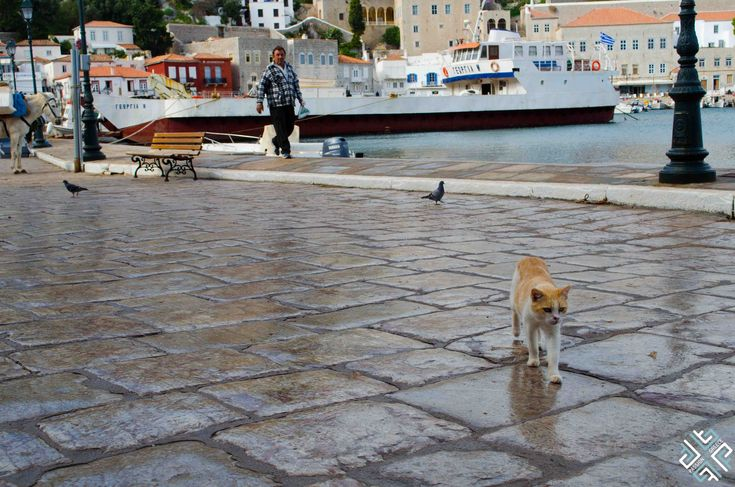 Greek cats of Hydra #passionforgreece #Greece #Hydra