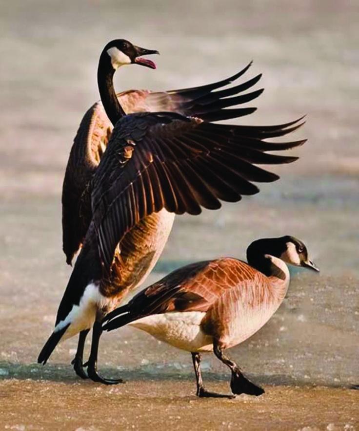 canada goose langford parka europe menu