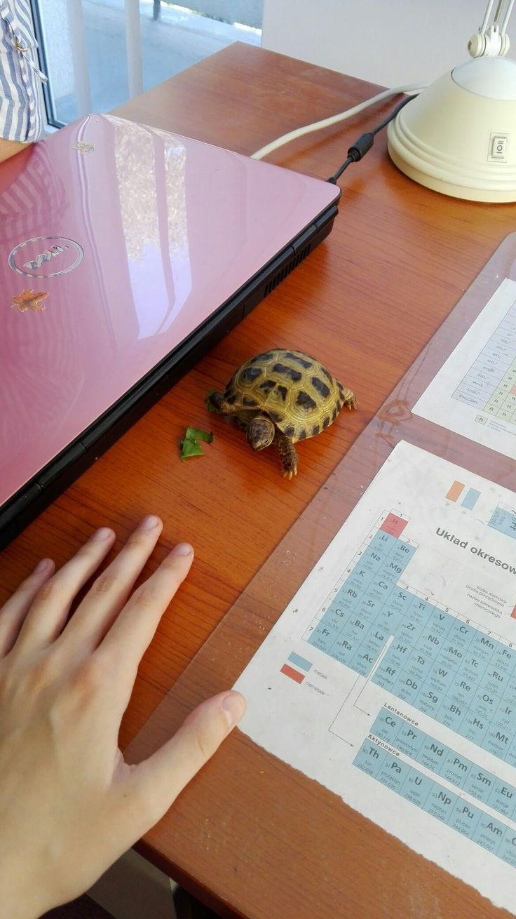 My baby turtle