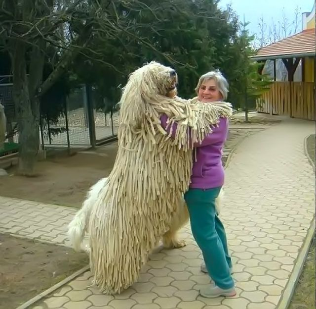 The biggest dog in the world (1)