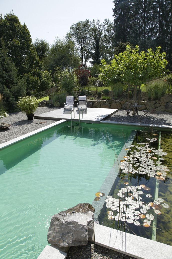 Biotope living pool. Natural pool filtration separated from the main pool.