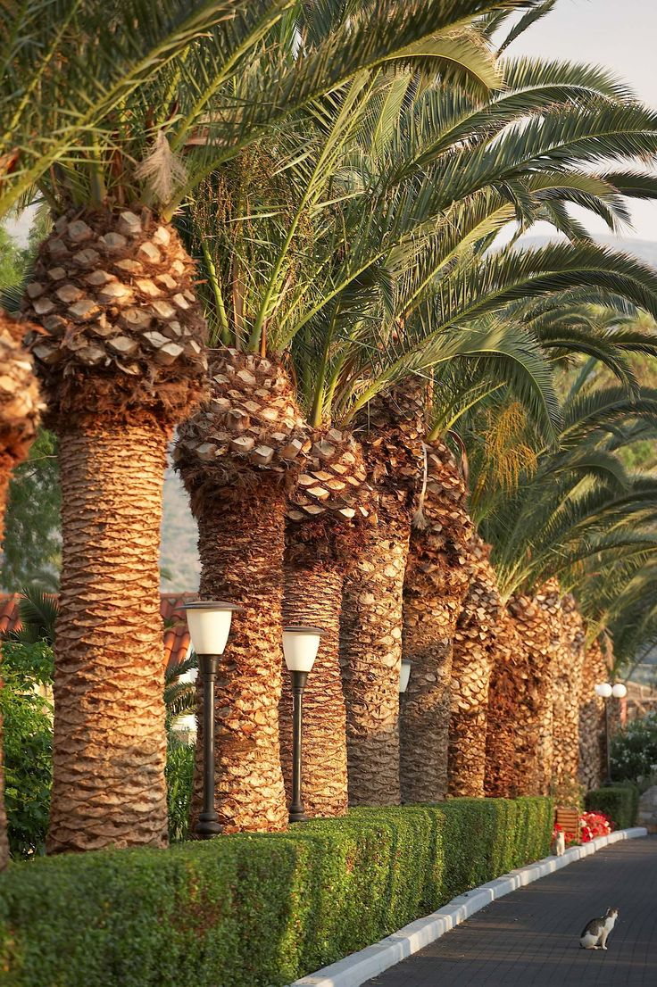 Beautiful Outdoor Landscaping For Any Household Budget