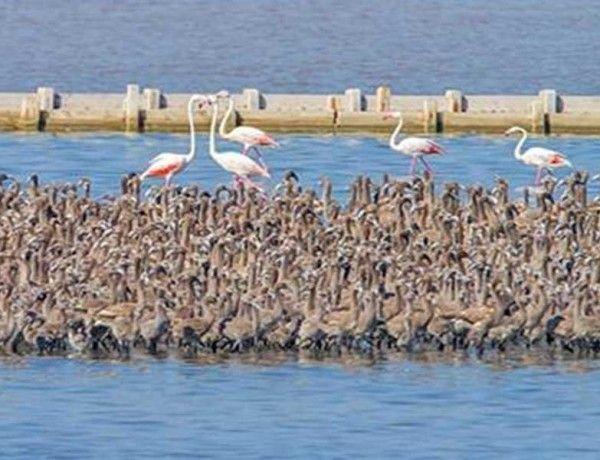 Türkiye'nin ilk suni adasında 7100 flamingo dünyaya geldi.. Detaylar ajanimo.com'da.. #ajanimo #ajanbrian #hayvan #animal #ada #flamingo #doğa