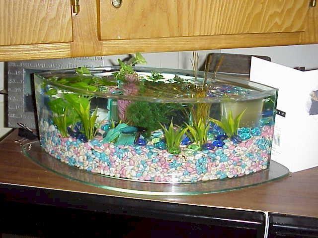 54 best betta aquariums images on pinterest betta fish for Best betta fish tank