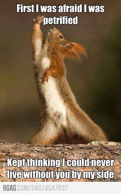 I! I will survive!: Two, Laughing, Discs, Squirrels, Funny Animal Pictures, Tina Turner, Songs, Funny Stuff, So Funny