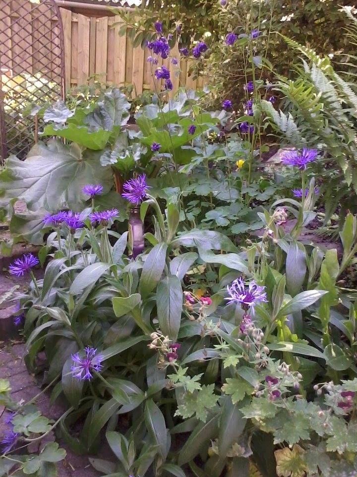 kruiden-bloemen-groenten-natuurlijke-moestuin-geen-wisselteelt