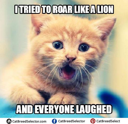 Kitten Memes | Cat Breed Selector