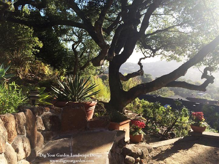 landscape designer san anselmo dig your garden creates beautiful eco friendly landscapes