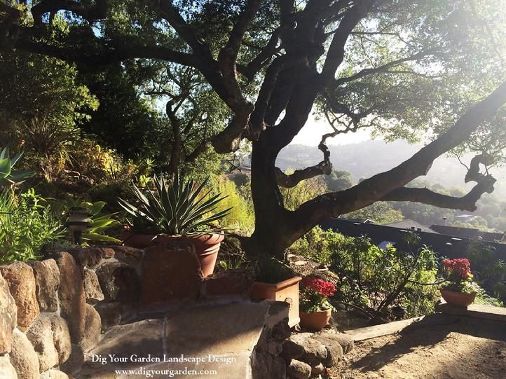 Garden Design Bay Area garden design with paver driveway walkway and patio ideas with diy backyard makeover from Landscape Designer San Anselmo Dig Your Garden Creates Beautiful Eco Friendly Landscapes