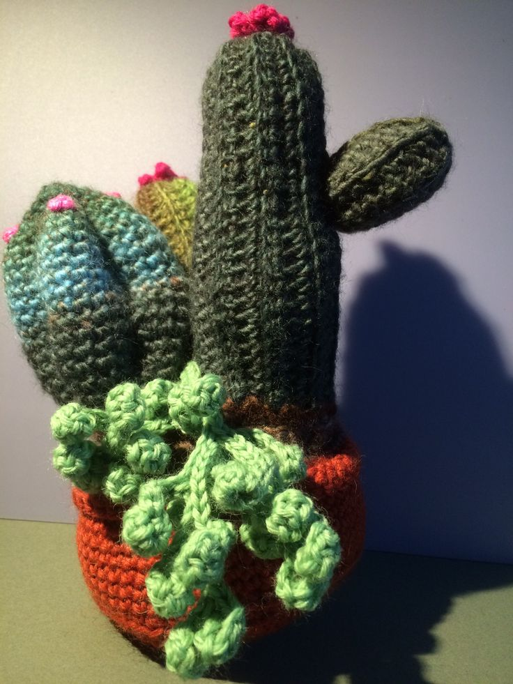 Cactus garden 1.