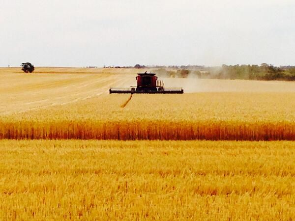 Harvesting in the #wheatbelt - pic courtesy of @TempletonTwells (on Twitter)