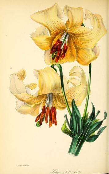 v.10 (1843) - Paxton's magazine of botany, - Biodiversity Heritage Library