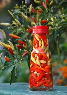If you have extra hot peppers, pepper vinegar is a great condiment for meat or greens.  Just boil a pint of vinegar, add a tsp. of salt, and pour it over your peppers.  It will be ready to eat after a week and lasts indefinitely.