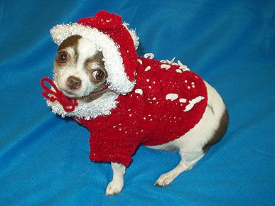 76 best Ugly Christmas Sweaters for Dogs images on Pinterest ...