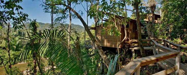 Our four Riverview tree houses are located about 75 feet above the Caves Branch River. The screened living room allows for panoramic views of the jungle and river below*.