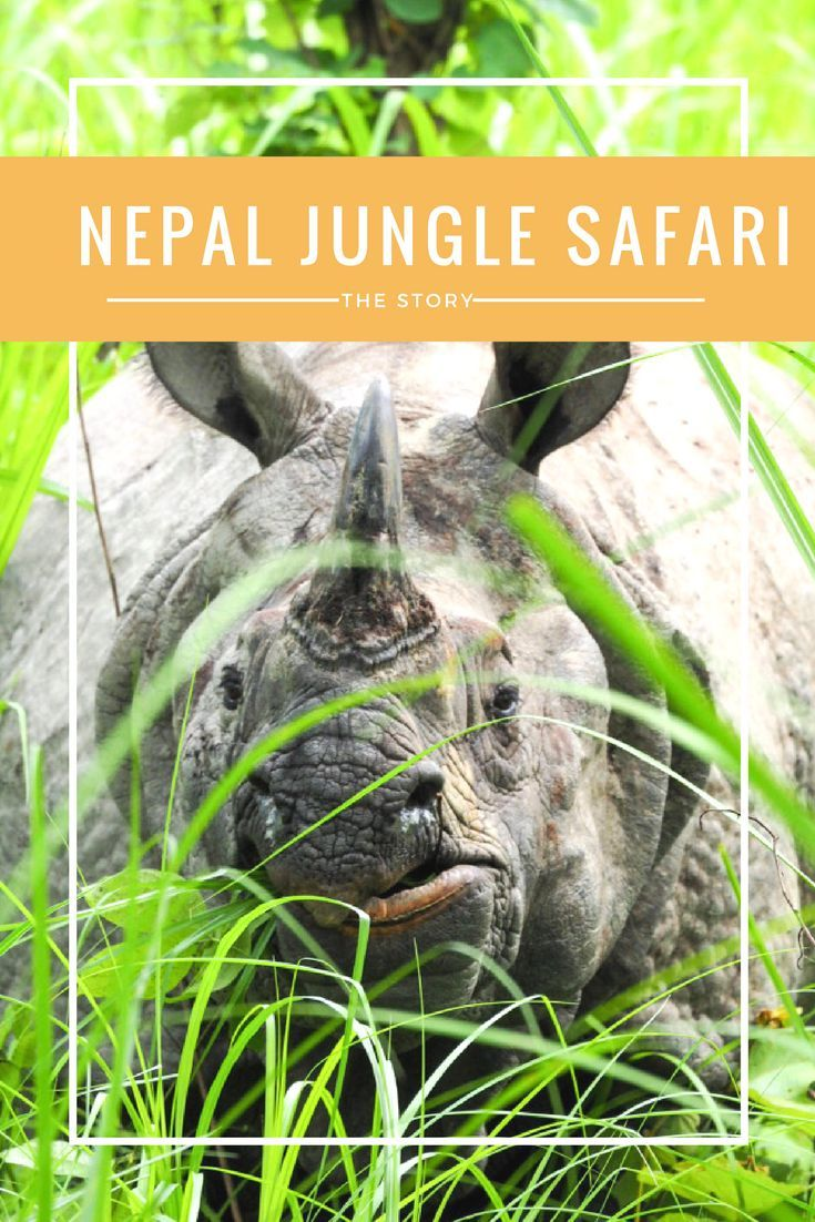 Who knew there were rhinos in Nepal!? Not me! Follow me on a jungle safari as I look out for rhinos and have an elephant shower! (scheduled via http://www.tailwindapp.com?utm_source=pinterest&utm_medium=twpin)