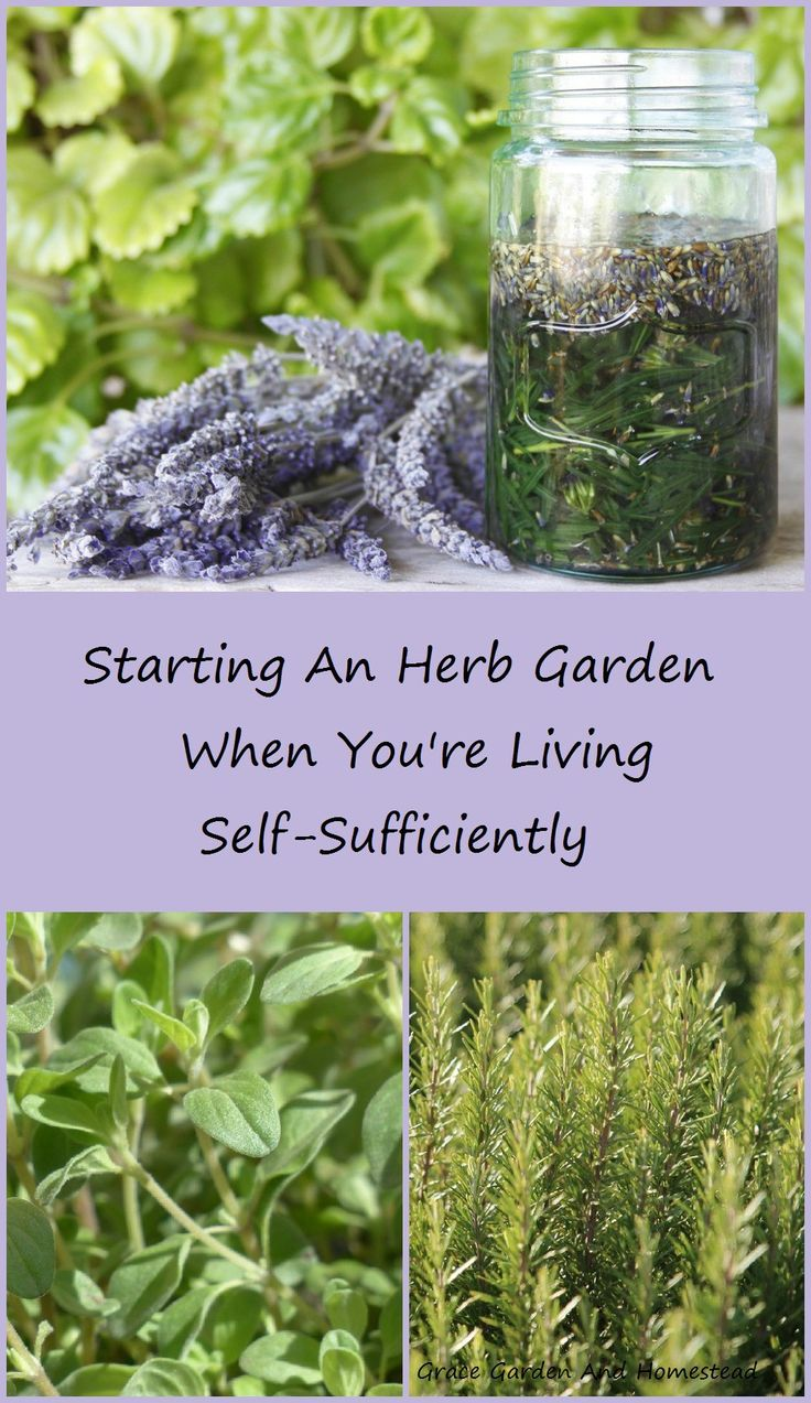 When you decide to live a self-sufficient life, there are so many things to be done it's hard to know where to start. Here are some tips on how to start and maintain your self-sufficient herb garden.