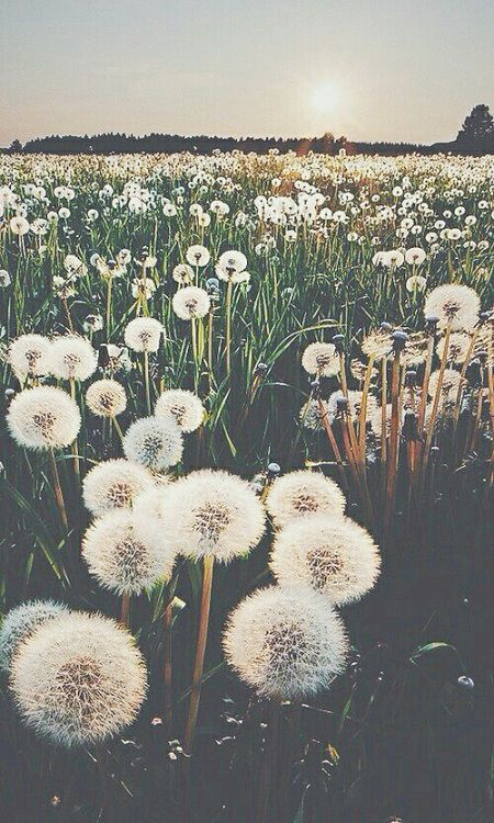tumblr photography flowers hipster - Google Search // Spring Inspiration