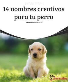 14 nombres creativos para tu perro   Al momento de elegir cómo se llamará pases varios días pensando. En este artículo te damos algunos nombres creativos para tu perro que pueden ayudarte.  #Consejos #Creativos #Perro #Nombres