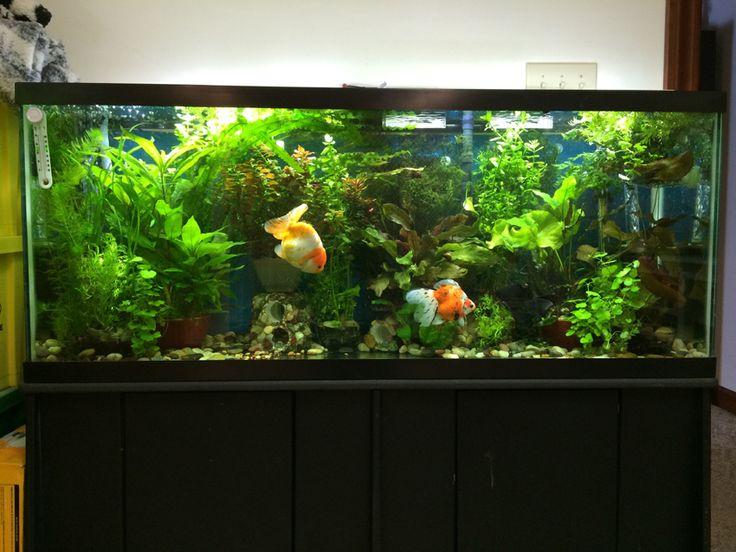 17 Best Ideas About Freshwater Aquarium Plants On
