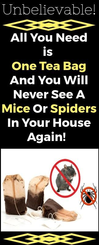 Unbelievable! All You Need Is One Tea Bag And You Will Never See A Mice Or Spiders In Your House Again!