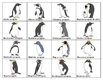 Cute Names For A Penguin Pillow Pet : Mas de 25 ideas increibles sobre Penguin names en Pinterest Best pet birds, Penguin publishing ...