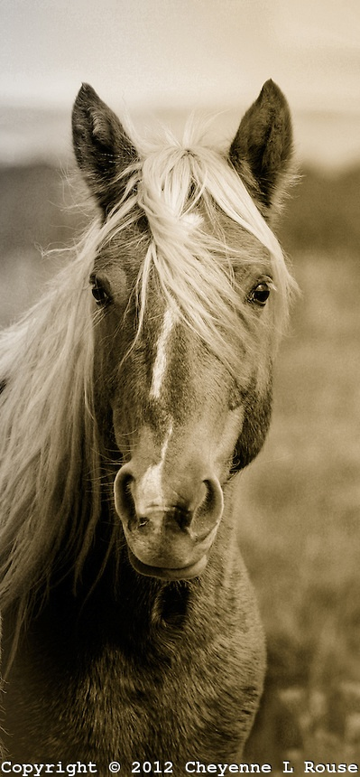 118 Best Wild Horse Collection Images On Pinterest