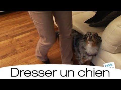 Apprentissage pour le jeune chien à marcher au pas. Utilisation du clicker training