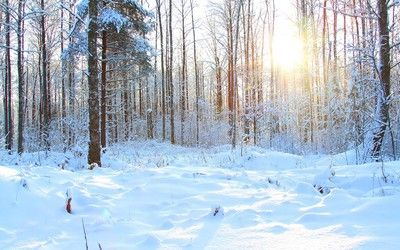 Snowy forest Nature desktop wallpaper download