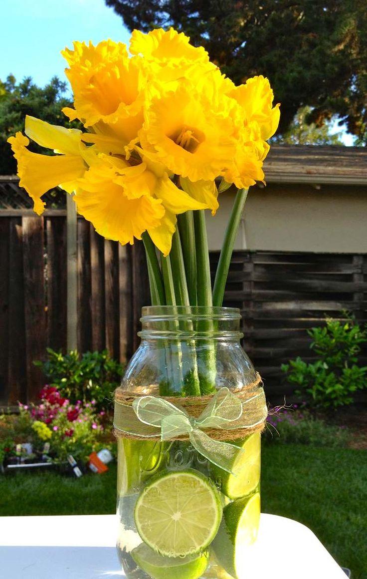 bouquet de fleurs printanières - des jonquilles en bocal de verre rempli de tranches de lime