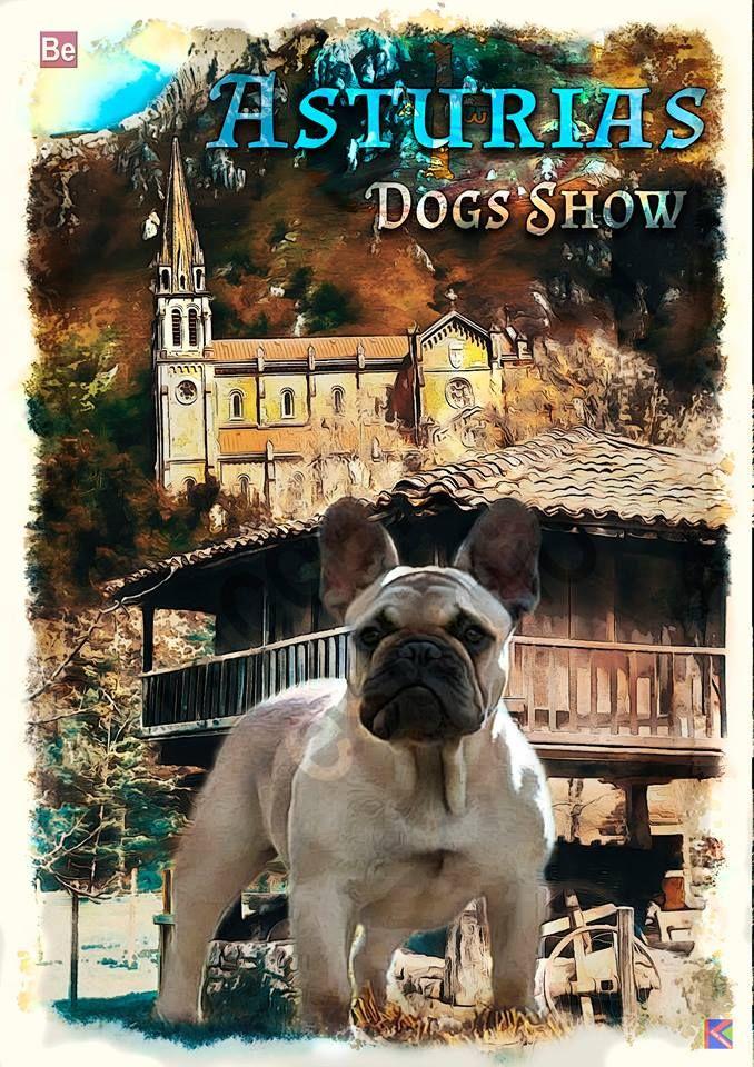 DOGS SHOW -ASTURIAS
