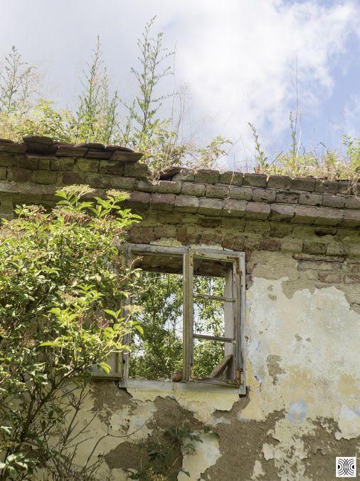 still life of a day  Sony a6000, helios 44-2  www.pavelvrzala.com  #PavelVrzala #stilllife #wall #window #grass #plants #bricks #sony #a6000 #helios44-2