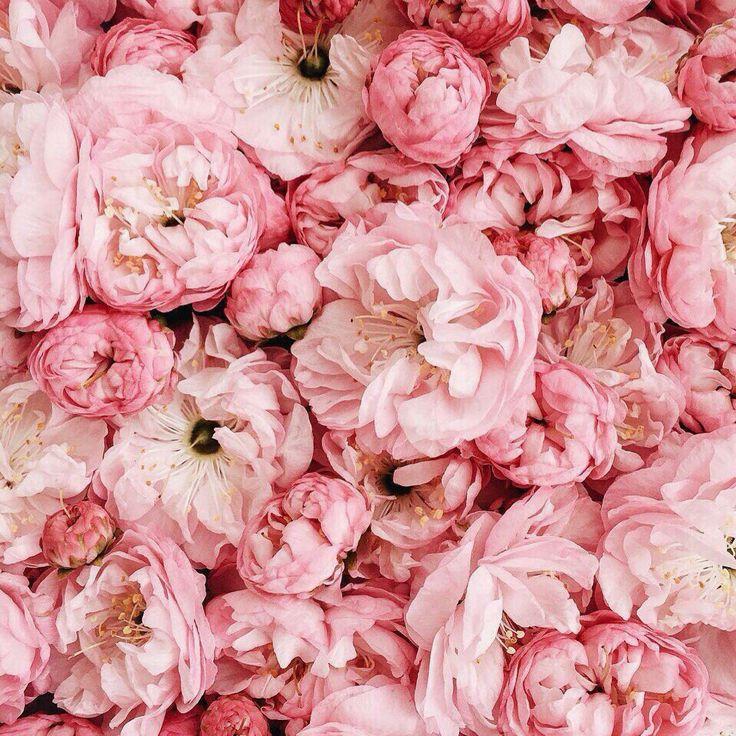 Gossip Girl Flowers