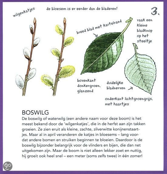 Boswilg