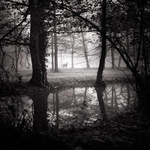 Secret garden ©ebrusidar
