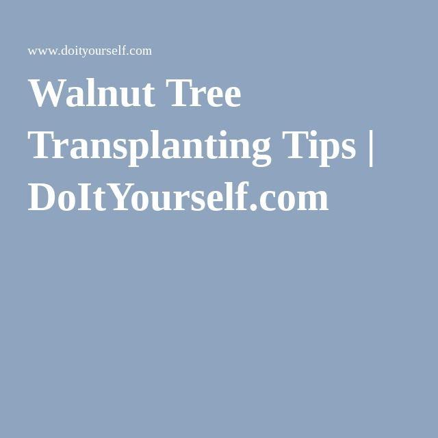Walnut Tree Transplanting Tips | DoItYourself.com