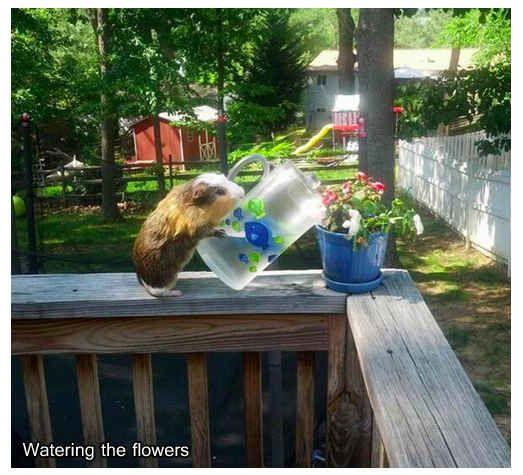 """And makes some time to water the plants. 